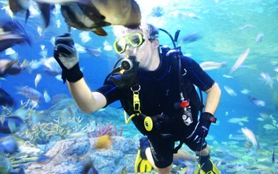 diving with marine fish