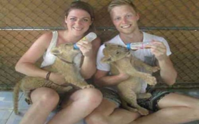 Feed asian lion cubs